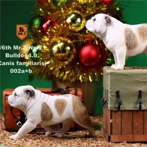 Mr.Z Real Animal Series No.21 MRZ021 BD002 1/6TH Scale British Bulldog