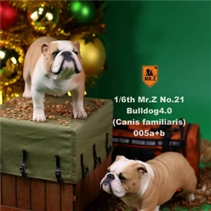 Mr.Z Real Animal Series No.21 MRZ021 BD005 Yellow and white Clown face 1/6TH Scale British Bulldog