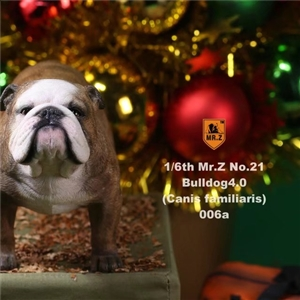 Mr.Z Real Animal Series No.21 MRZ021 BD006 Tan Clown face 1/6TH Scale British Bulldog